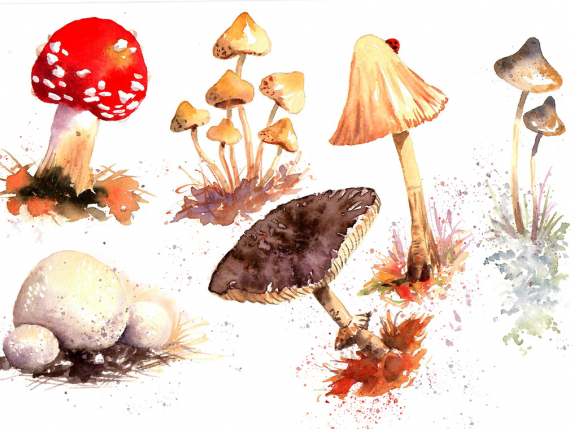 Mushrooms illustrations painted in watercolor by Laure Paillex