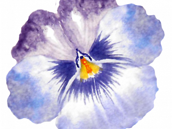 Pretty painted pansies in watercolor tutorial by Laure Paillex