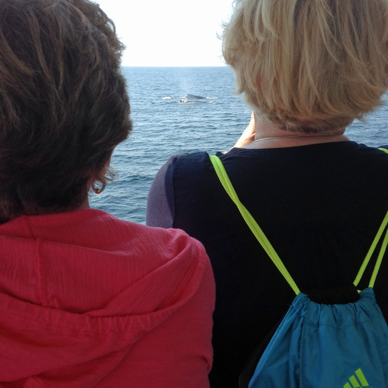 August 2015 Whale Watch Plymouth, MA